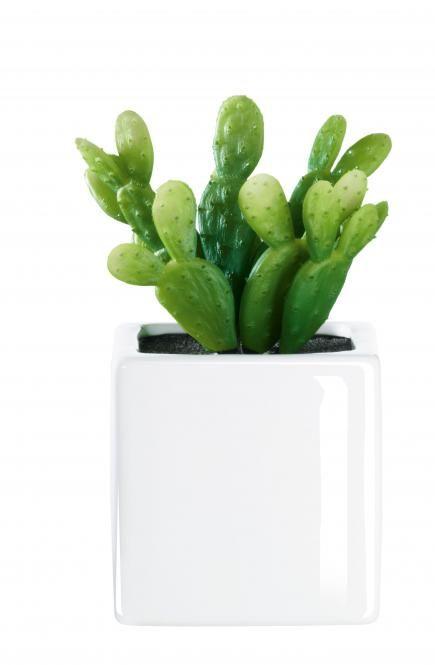 ASA Selection Kaktus im Weissen Porzellantopf H 8 cm