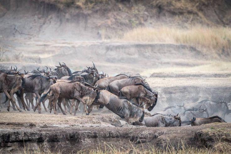 Serengeti für Selbstfahrer, geht das überhaupt? Wir sind mit unserem Land Rover fünf Tage auf eigene Faust auf Safari gewesen.