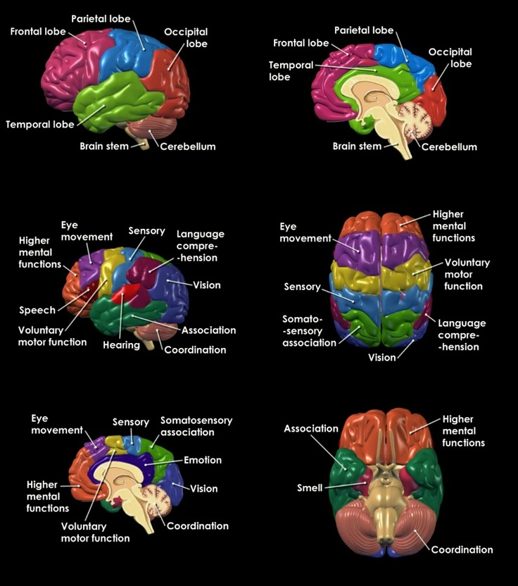 200 best Human Brain images on Pinterest   Neuroscience, The brain ...