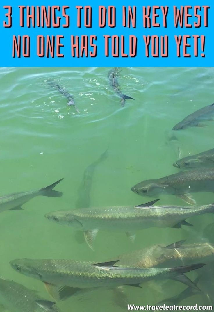 1. Feed Tarpon At Robbie's Marina This marina isn't actually in key west but it's in Islamorada on the way, and it makes a great stop on the long drive down to key west. I promise everything else is in Key West. At this marina they charge you a couple dollars for a bait bucket …