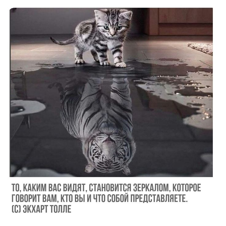 #цитаты #мудрыецитаты #жизнь #экхарттолле #толле #экхарт #радость #душевно #момент #эзотерика #тигр #отражение #внутренниймир #человек #суть #красота