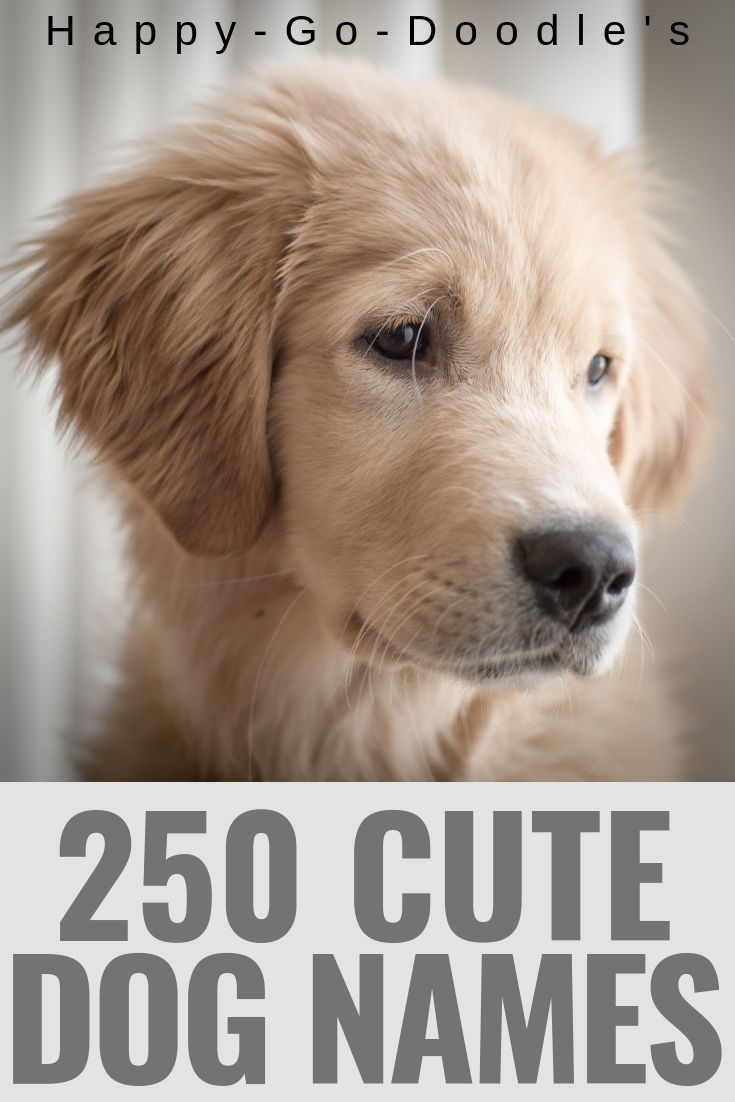250 Best Dog Names Ending In Y Cutie Pie Puppy Names That End In