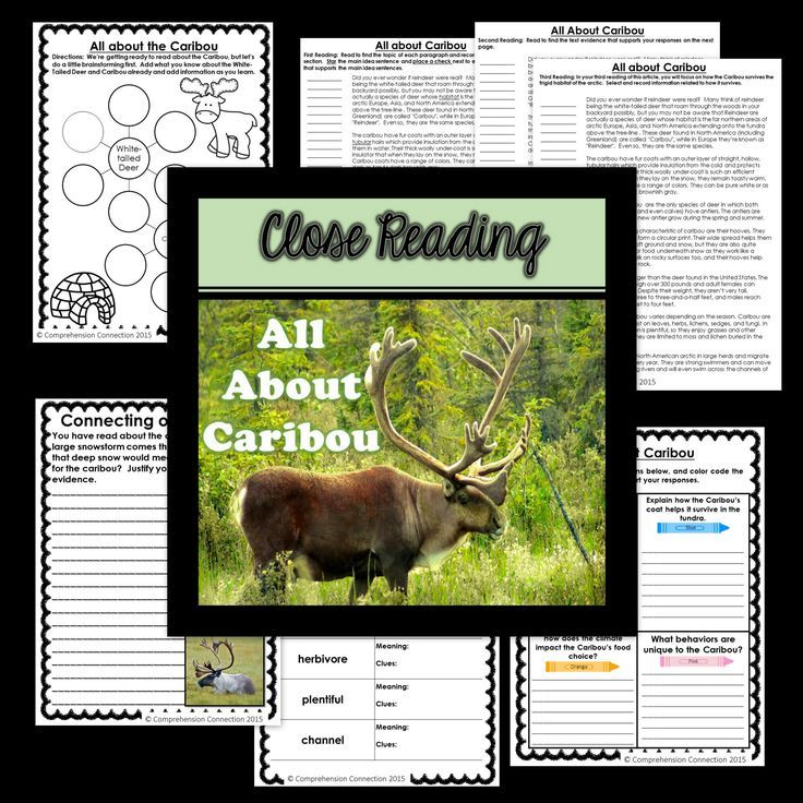 This Close Reading article and supplementary materials will take your students through the Close Reading process and would work well as an introduction to Caribou research or a study of arctic animals. It includes a thinking map for pre-reading, a response sheet for post reading day 1 or 2, and a written prompt for after the third reading. The set is intended to be used in multiple sessions for deepening student understandings and reflections.