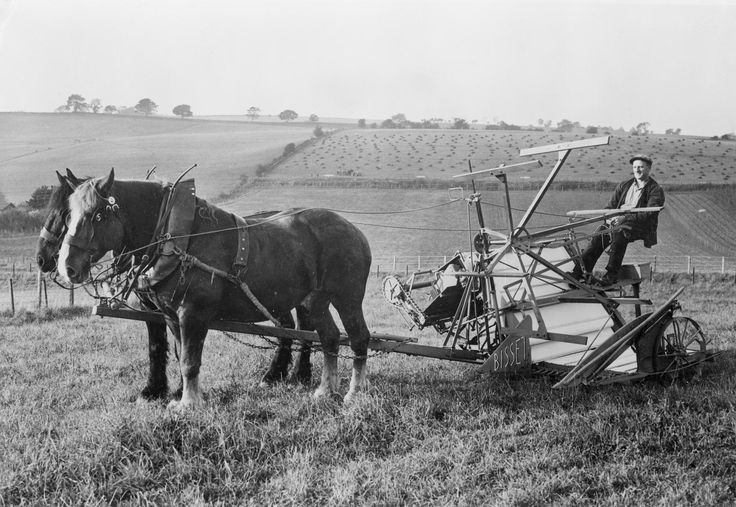 Black and white copy negative showing William Morrison driving a horse-drawn Bisset binder at West Park Farm, Blairgowrie, Perthshire, in the 1940s.