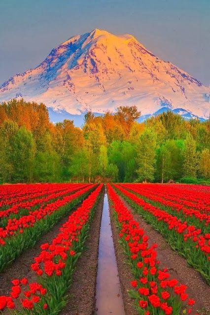 Mt Rainier view from Puyallup, Washington