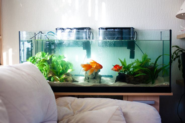 17 best images about gorgeous goldfish on pinterest pet for Fancy fish tanks