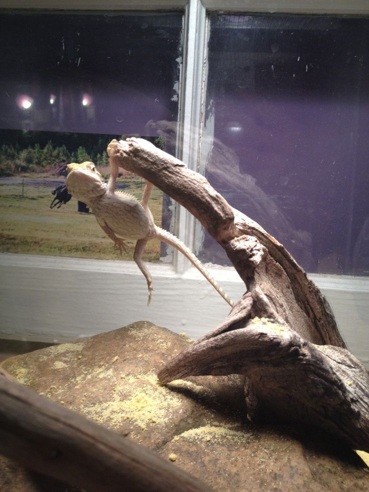 Me: what are you doing? Dragon: you know just hangin around