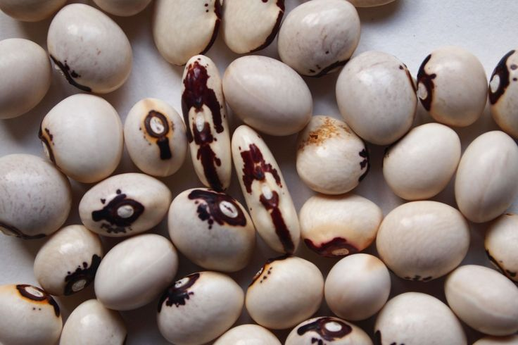 Meer weten over vergeten groente? Lees hier alles over heilige boontjes, ook wel bekend als monstrans bonen, met een vegetarisch Toscaans recept.