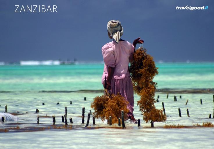 #Zanzibar #travelgood #viaggi