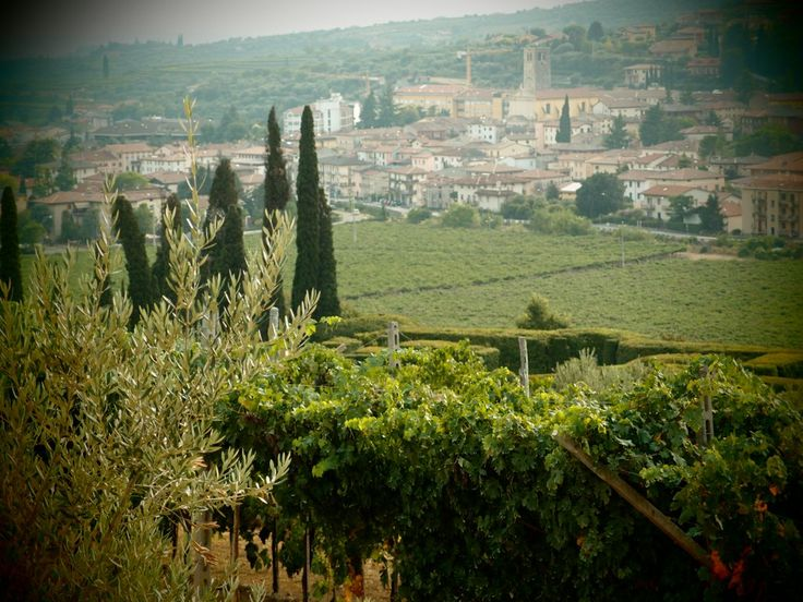Vi aspettiamo domenica 25 in Vapolicella per Cantine Aperte!  http://www.amaronevalpolicella.org/it/2855/cantine-aperte-valpolicella