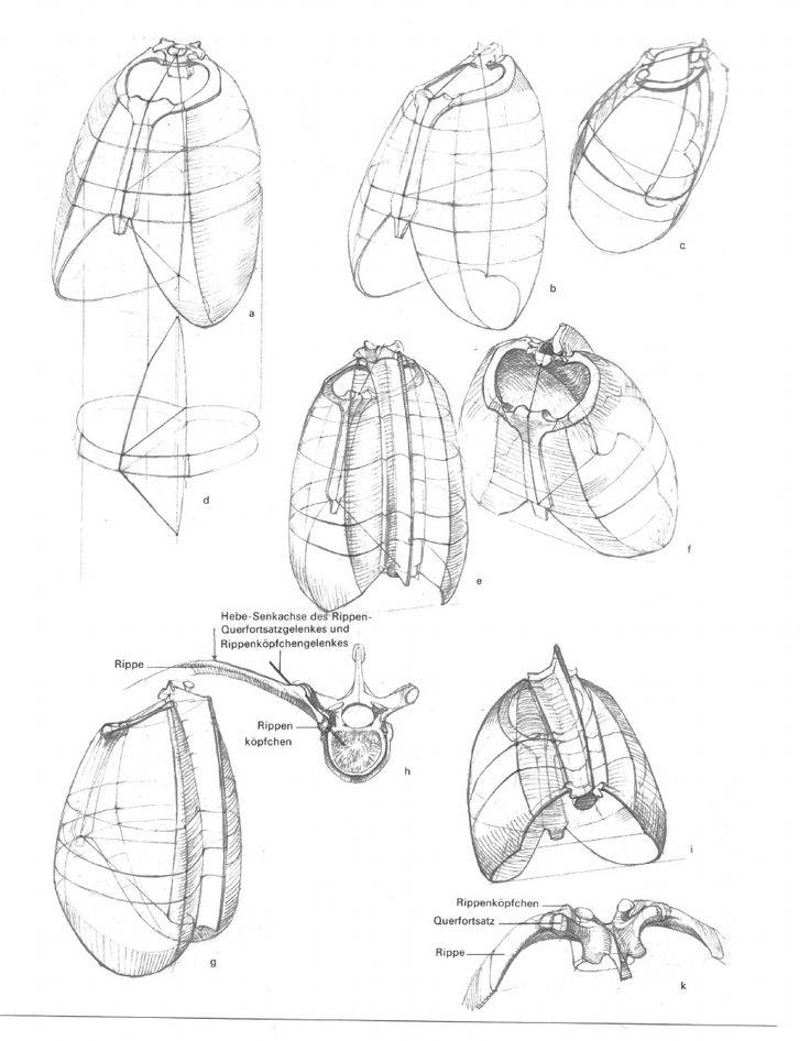 257 besten Anatomy Reference Bilder auf Pinterest | Anatomieverweis ...