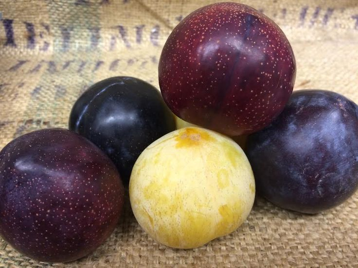 Plum-O-Rama!  We've got a plethora of California plum varieties in the store right now! Choose from: Black Plums, Red Plums, Golden Treat Plums and Prune Plums! Each of these stone fruits has a unique, super juicy flavor and a nice, creamy mouth feel! Eat them out of hand, add them to fruit salads, or get crazy and throw them on the grill and top them with honey, chopped pistachios and mascarpone cheese! The Produce Station - Produce - Ann Arbor, MI