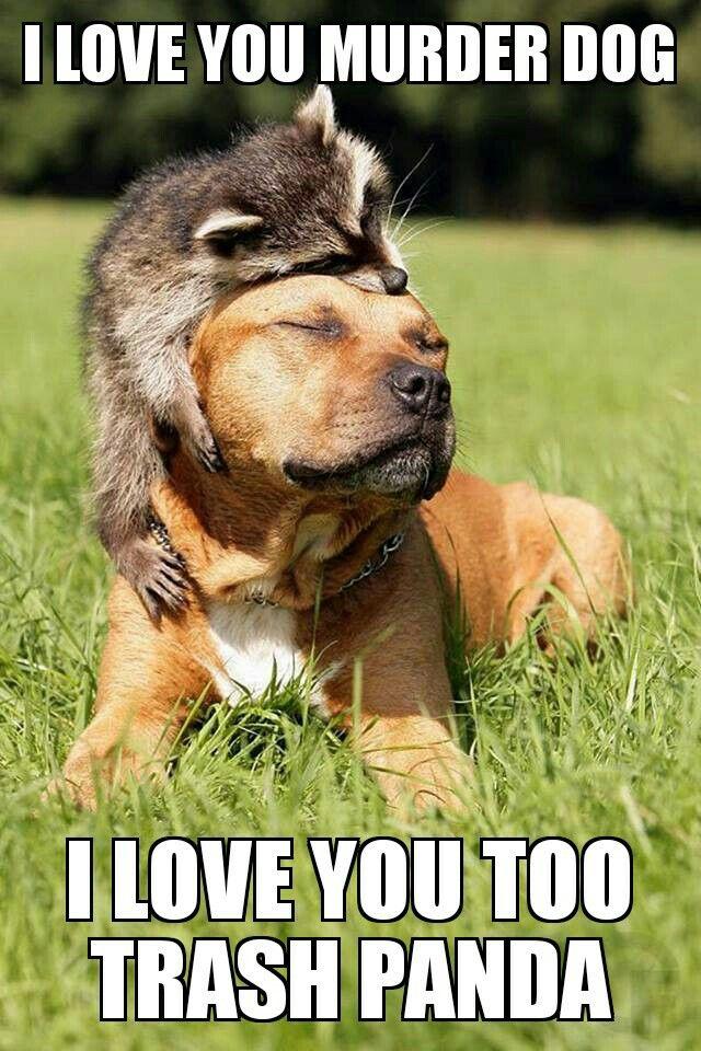Funny Names For Animals Meme : Best alternative animal names images on pinterest