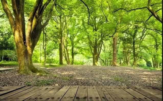16 Pemandangan Alam Hutan Us 11 46 30 Off Foto Wallpaper Hutan Pemandangan Alam 3d Stereo Wallpaper Ruang Tamu Kamar Tidur Tv Latar B Di 2020 Pemandangan Hutan Mural