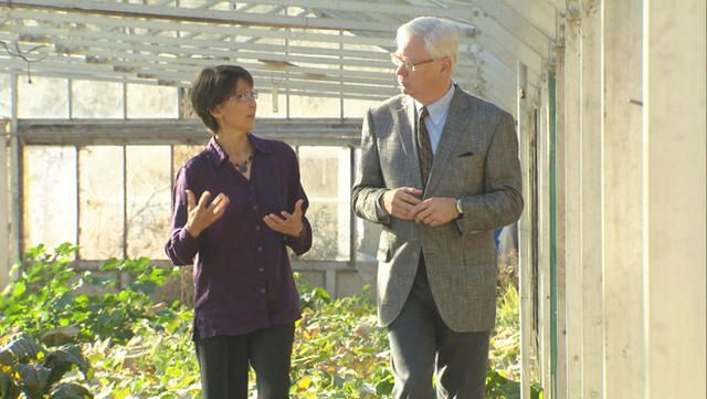 Digging for seeds of truth in GMO debate - CBS News
