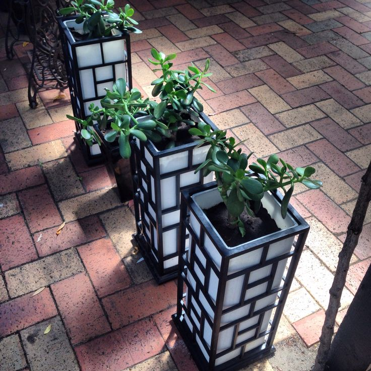 Old bedside lamps from Vietnam (no longer working) repurposed into planters. Waste not,want not! Fewer trips to the tip!