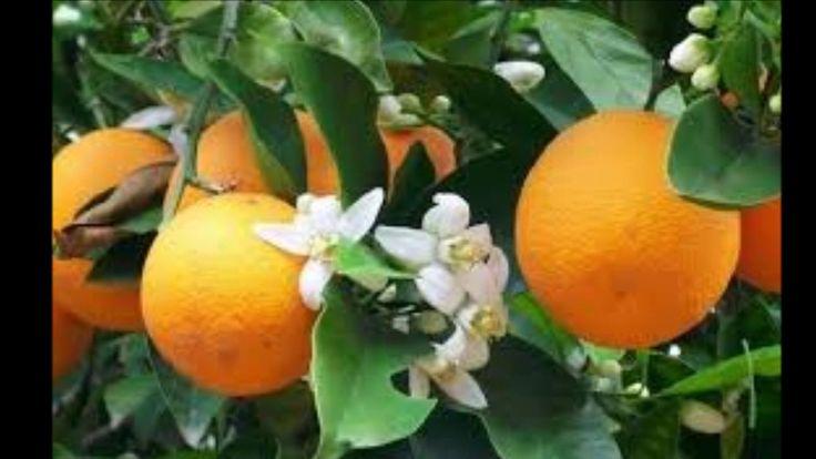194 Best Images About Jardines Y Huertas Organicas On