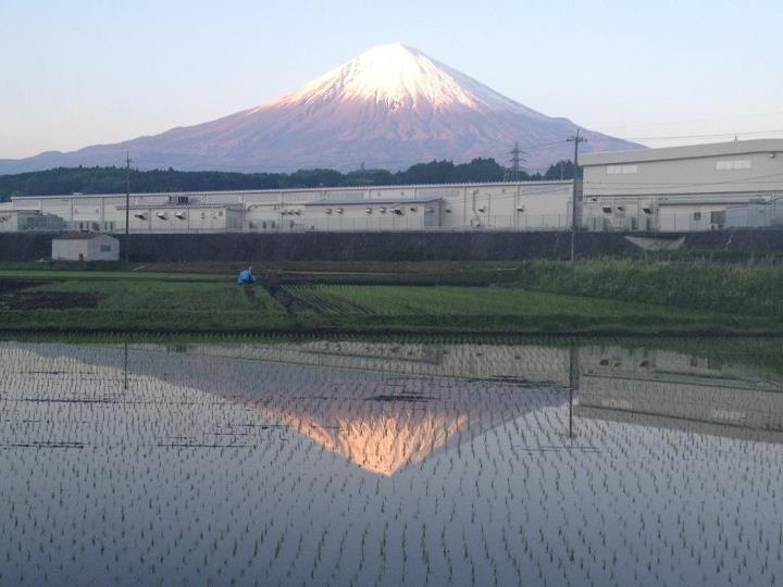 """Sakasafuji"", Mt. Fuji reflected in the rice field"
