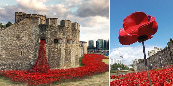 1914-2014: alla Torre di Londra papaveri rossi in memoria del sangue versato.