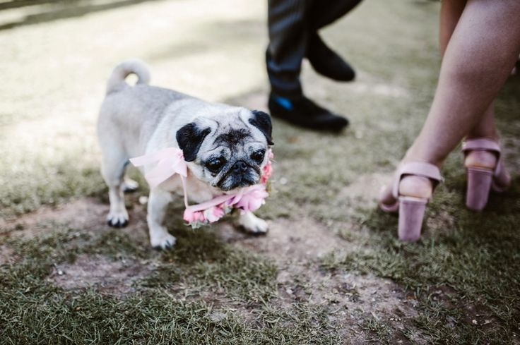 Bride and Grooms dog. Photography by Andrew Brannan.
