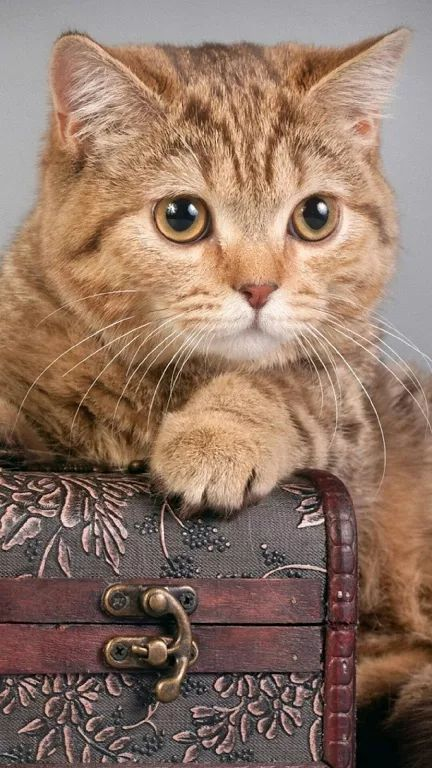 Photo - Google+ #Cats