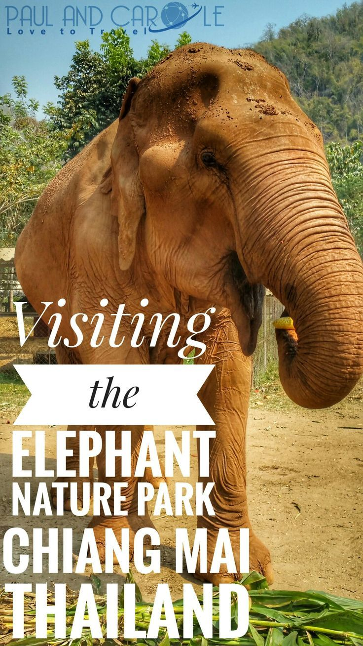 We spent a day at the Elephant Nature Park in Chiang Mai, Thailand. Here's what it entailed.