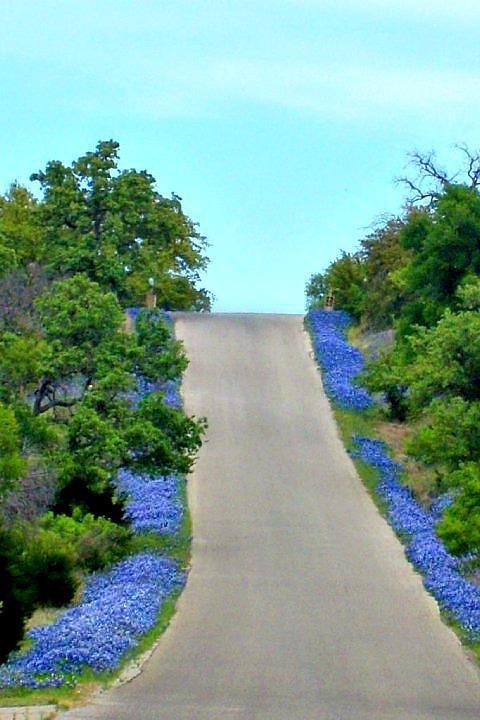 .: De Vivr, The Roads, Favorite Places, Joy, Finding Joie, Gods Love, Wild One