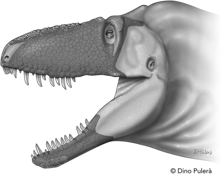 Figure 4: The craniofacial epidermis of Daspletosaurus horneri sp. nov., based on comparison with its closest living relatives, crocodylians and birds. : Scientific Reports