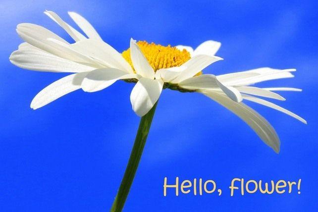 Hello, flower!  A card featuring an original photograph.  Blank inside. £2.70