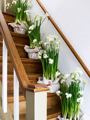 Instead of the traditional poinsettia, make it a fragrant holiday with potted paperwhites. #christmas #holiday #crafts