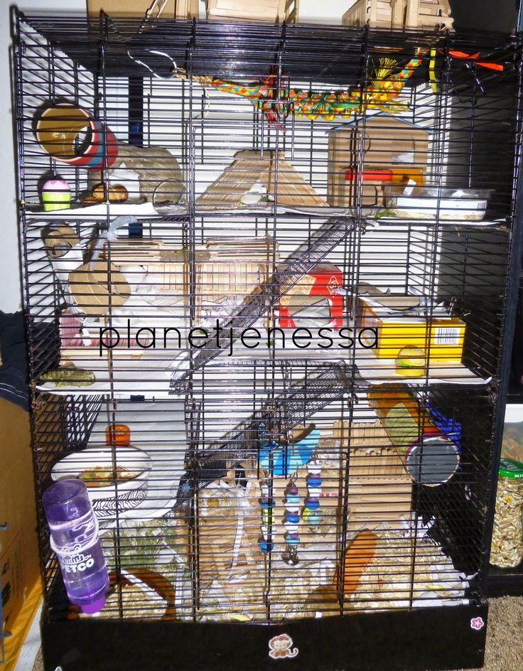 Rat Manor Cage Tour