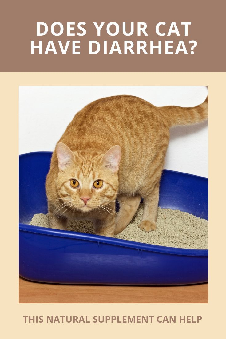 Here Is An Easy Natural Solution To Cat Diarrhea Click Here To Find Out One Easy Way To Stop Runny Poos Cat Diarrhea Cats Probiotics For Dogs