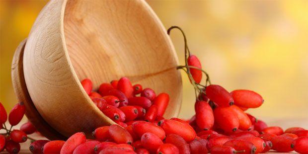 Wissenswertes über die Berberitze  Die reifen Früchte der Echten Berberitze sind nahezu alkaloidfrei. Aus ihnen können Mus und Marmelade hergestellt werden