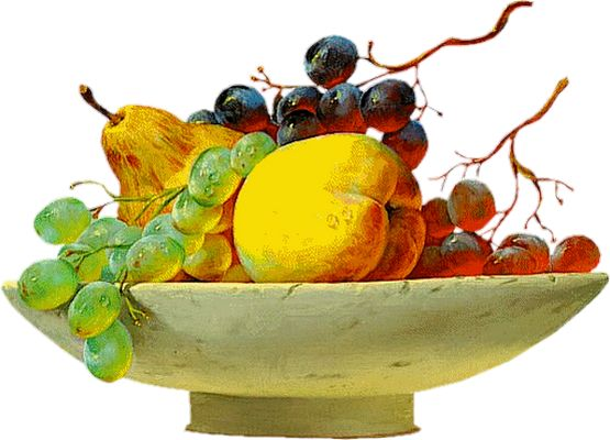 Owoce biustonosza: Rysowanie