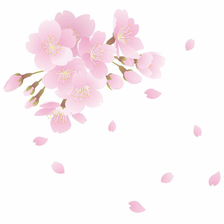 桜の花びらが落ちるスピード