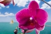 Summer Paradise Royalty Free Stock Photo, Pictures, Images And Stock Photography. Image 973917.