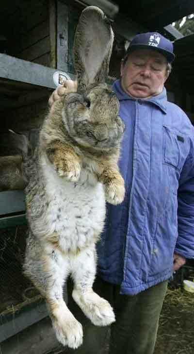I always hoped that this bunny has both ears...