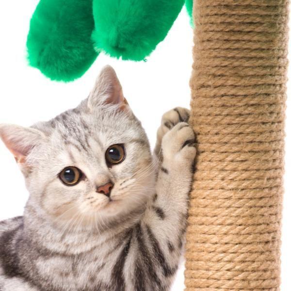 Cómo hacer rascadores para gatos caseros. La naturaleza de los gatos hace que necesiten arañar, no sólo para tener sus uñas afiladas, también para soltar estrés y comunicarse con sus amos o con otros gatos. En unComo te enseñaremos a cómo hac...