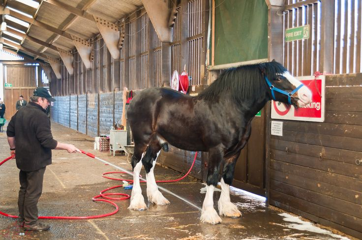 Shire Horse Spring Show 2011 | Flickr