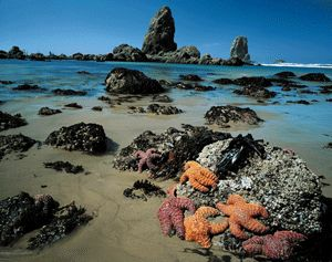 Oregon Tidepools if you've never seen them, definitely a bucket list item!!!! Photo Courtesy of Oregon Bed & Breakfast Guild