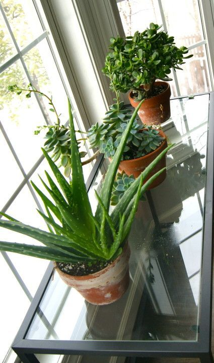 Succulent care tips- how to keep them alive and beautiful!