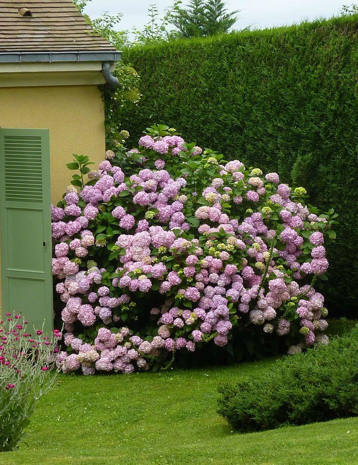les 1384 meilleures images du tableau flowers hydrangeas. Black Bedroom Furniture Sets. Home Design Ideas