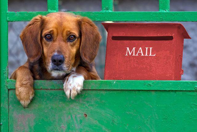 E-Maillerinize cevap Alamıyor musunuz? | Cloudnames Türkiye Blogu