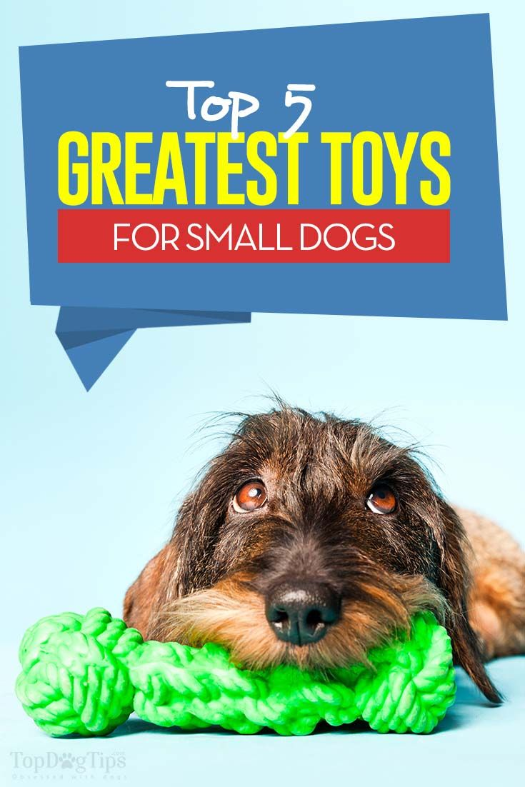 The 5 Best Toys For Your Small Dog Small Dogs Interactive Dog Toys Small Dog Toys