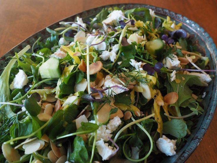 springtime golden beet salad