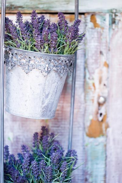 Always love lavender - was my signature scent at my wedding and now in the house!