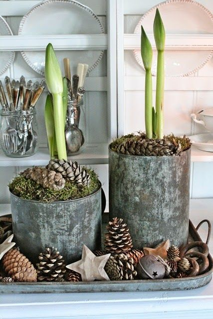 Pine cones & moss to dress planters <3.. Table centrepiece #MyPerfectInterfloraChristmas