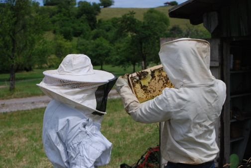 Friends visiting the beekeeper Yves in the Black Forest