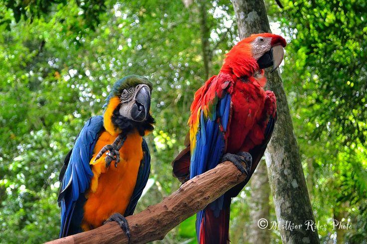 Malkior Riles Photographs: Parque de las Aves. Brasil
