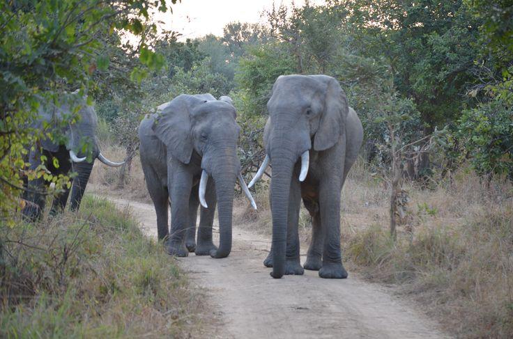 Chikoko Walking Trails early morning traffic